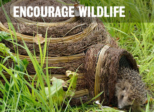 Encourage Wildlife