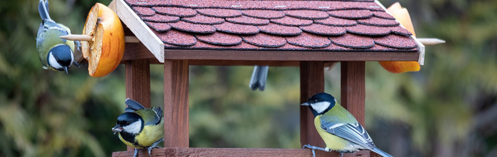 Blue Tits feeding at bird table - image