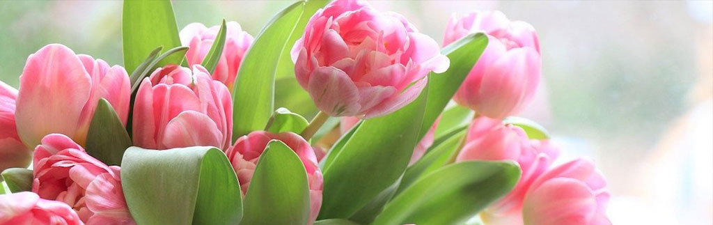 Mother's Day tulips - image