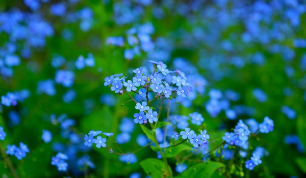 Spring Garden Preparation - image